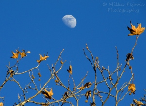 WordPress weekly photo challenge: In the background - Moon rising during the day