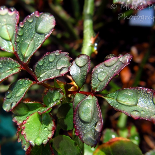 Let's Be Wild Weekly Photo Challenge – Scent of wet dirt after the rain