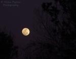 Full moon rising above the horizon