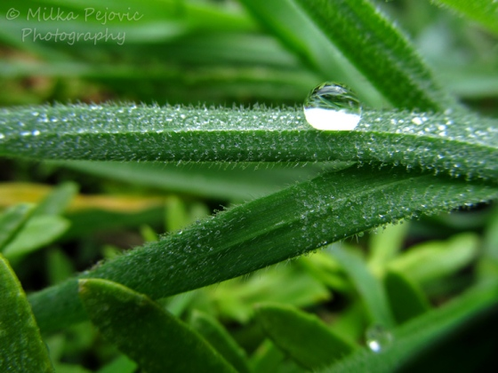 Macro Monday: The beauty of the morning dew on grass