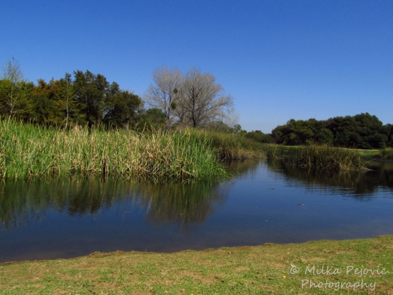 Let's be wild photo challenge - reflections at the pond