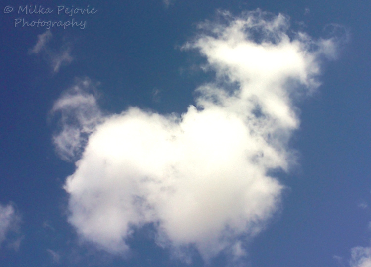 Clouds in the shape of a dog