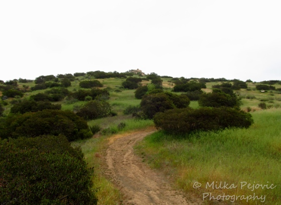 Cee's Fun Foto Challenge: Trail at Louis Stelzer County Park