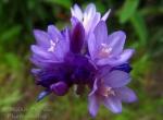 Tiny purple and white wildflowers