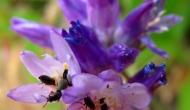 Macro Monday: Bugs hiding inflowers