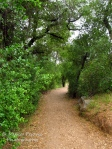 Cee's Fun Foto Challenge: Green trail at Louis Stelzer County Park