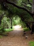 Cee's Fun Foto Challenge: Walking down the trail