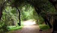 Cee's Fun Foto Challenge: Walks, paths andtrails
