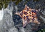 WordPress weekly photo challenge: Sea - colorful sea star