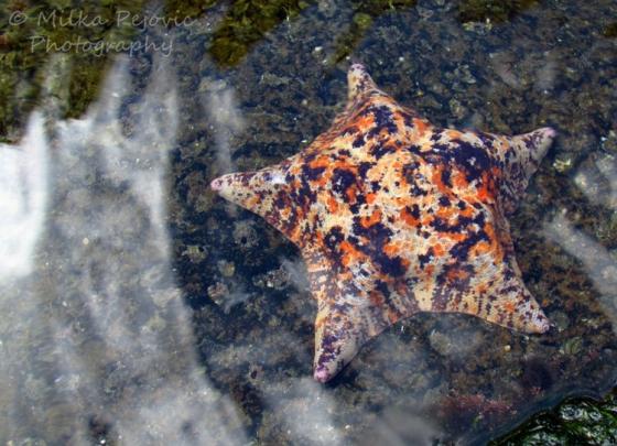 Cee's fun foto challenge - texture of a sea star