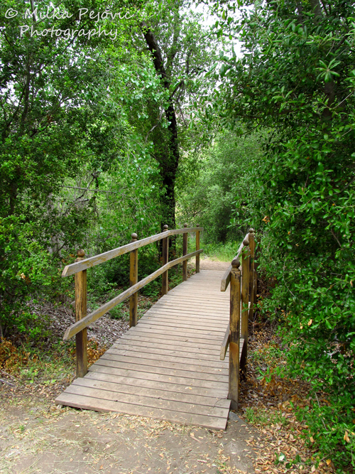 Bridge in the woods of a San Diego county park