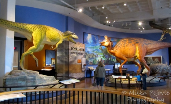 Sunday Post: Attraction - Dinosaurs at the San Diego Natural History Museum