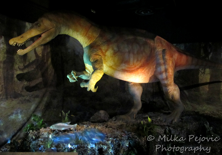 Sunday Post: Attraction - Dino Jaws at the San Diego Natural History Museum