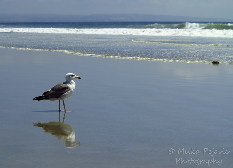 Travel theme: Ripples at Coronado Beach, Pacific Ocean