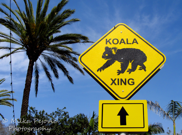 KOALA XING sign at the San Diego Zoo