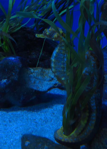 Travel theme: Peaceful seahorses underwater