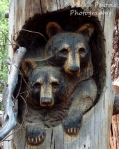 Travel theme: Wood sculpture of lifesize bear cubs in tree trunks