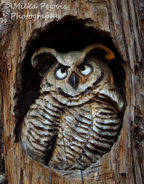 Travel theme: Wood sculpture of a lifesize owl in tree trunk