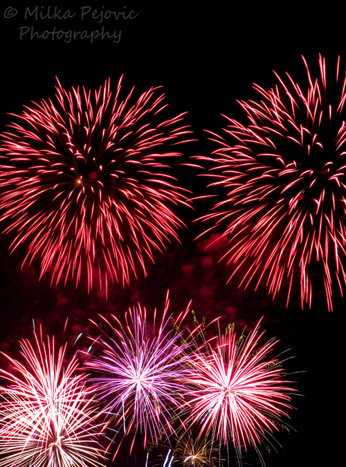Fourth of July fireworks - burst of pink and red