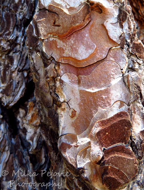 Wordpress weekly photo challenge: an unusual POV - Patterns and colors on pine tree bark