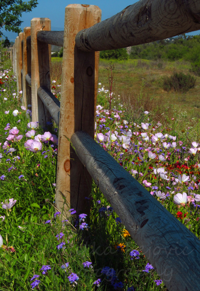 Wooden fence and spring wildflowers in San Diego