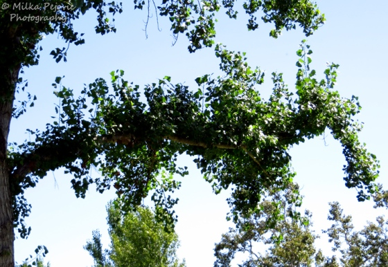 Travel theme: Hidden leafy sea dragon in a tree