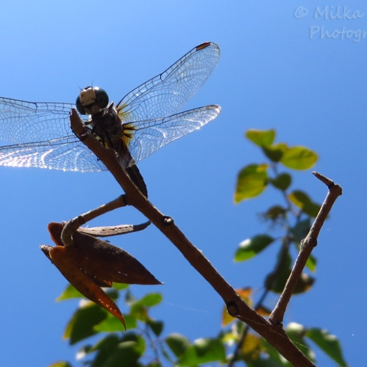 Travel theme: see through wings of a dragonfly