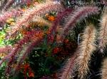 Macro Monday: pink grass