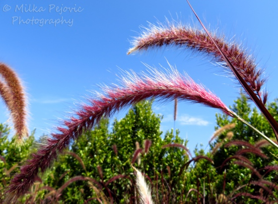 A Word A Week Challenge: Arch - pink grass
