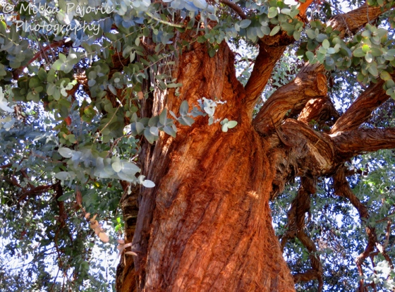Travel theme: Brown and twisted tree trunk