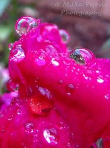 Cee's fun foto challenge: Reflections in rain drops