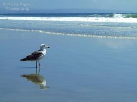 August - seagull on Coronado beach