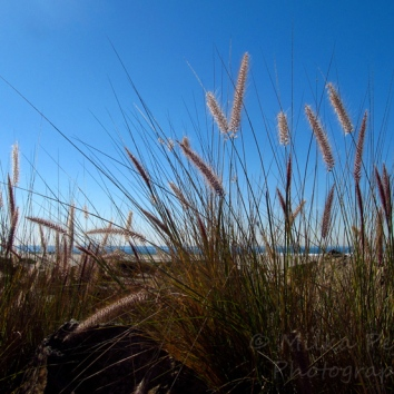 August - grass with ocean background