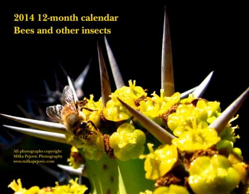 2014 12-month calendar - bees and other insects