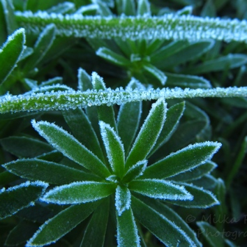 December - frost 3
