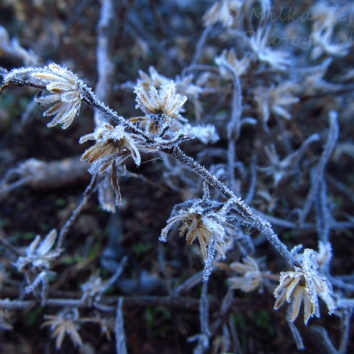 December - frost 2