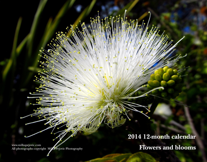 2014 12-month calendar - flowers and blooms