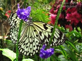 July 2015 - paper kite butterfly
