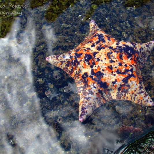 July 2015 - star fish with clouds reflecting in water
