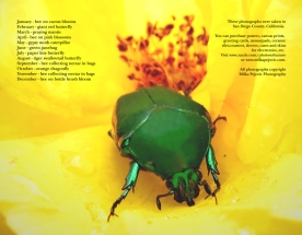 2015 bee and insect calendar - back cover