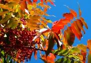 November - sumac