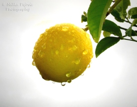 October 2015 - raindrops on yellow lemon