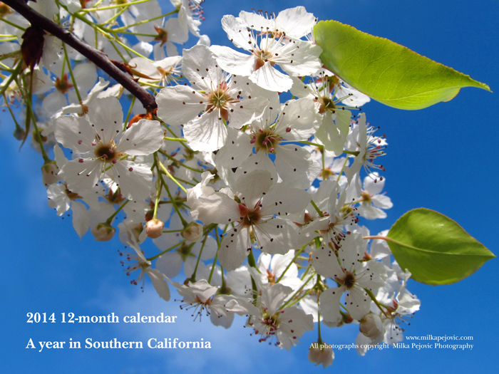 2014 12-month calendar - a year in Southern California