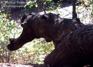 Dragon's head in a tree trunk