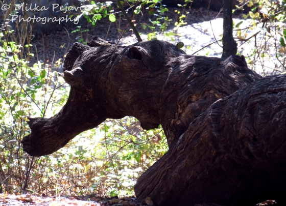 Dragon's head in a tree trunk