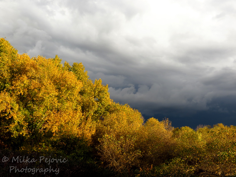 Contrast between trees in the sun and dark sky with clouds