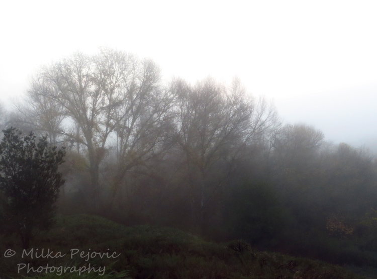 Winter fog in the trees in San Diego