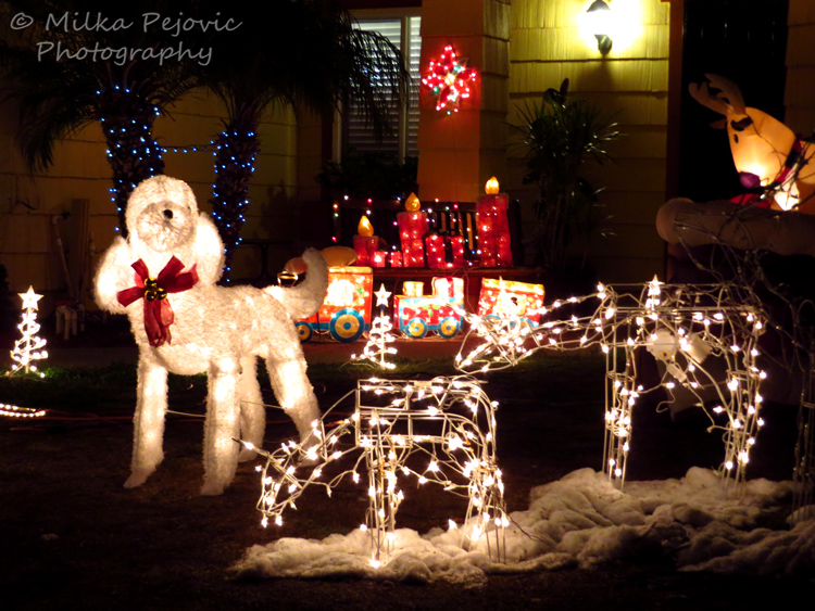 Christmas light reindeers and dog