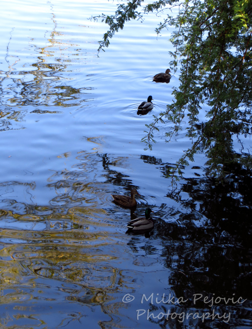 A Word A Week Challenge – Undulate, water ripples