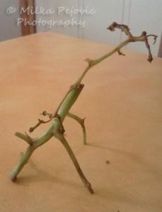 Food art with grape vines: giraffe
